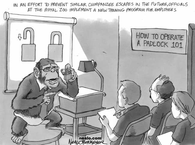 chimpanzee monkey zoo lock